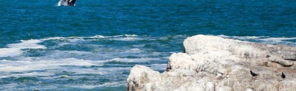 Hermanus - Whale Watching